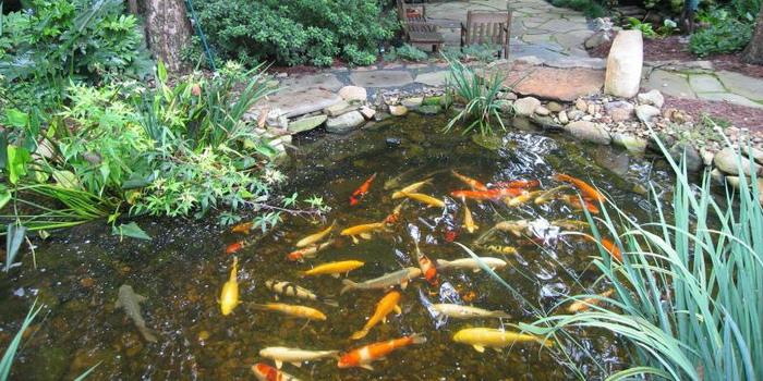 заселить рыб в пруд